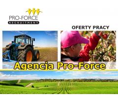Agencja Pro Force , 15 College Place , SO15 2FE